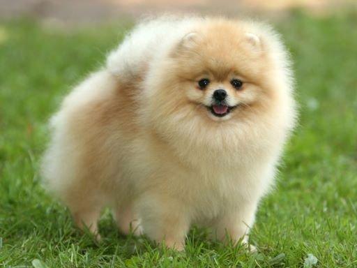 породы маленьких собачек фото и цены